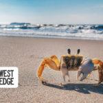 Oregon Coast Weekend Planner: January 24-26, 2020