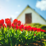 Spruce Up Your Home Before Spring Selling Season