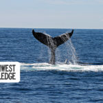 Oregon Coast Weekend Planner: February 28 – March 1, 2020