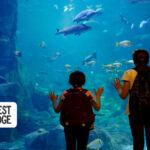 Seattle Metro Weekend Planner: September 17-20, 2020