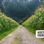 Oregon and SW Washington Weekend Events: October 29-November 1, 2020