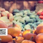 Oregon and SW Washington Weekend Events: October 8-11, 2020
